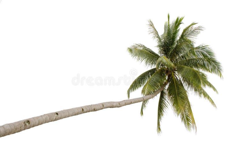 pojedynczy palma fotografia stock