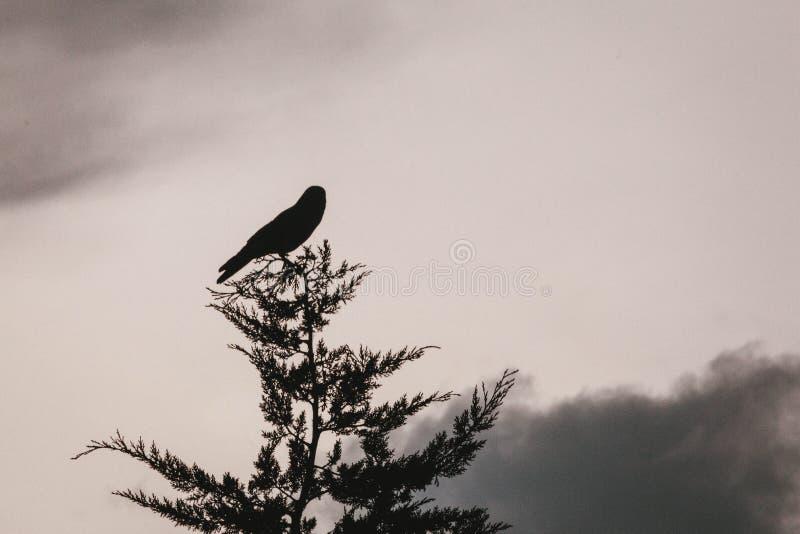 Pojedynczy ptak na wierzchołku drzewo obraz stock