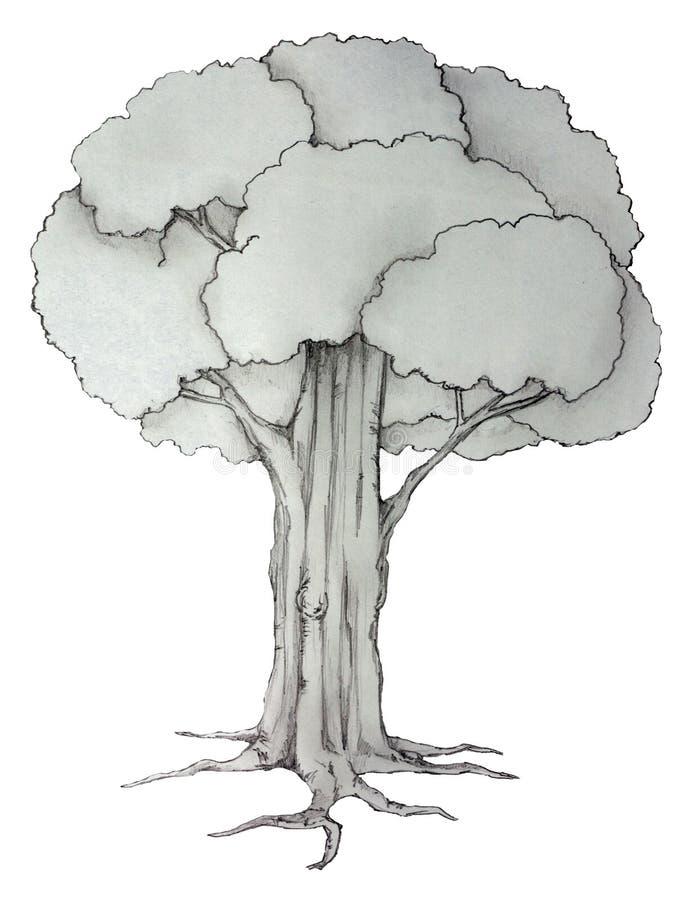 Pojedynczy rysunkowy drzewo na papierze ilustracja wektor