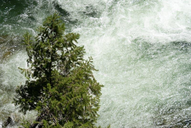 Pojedynczy samotny drzewo stoi bezczynnie bieżne błyskawiczne wody kindżałów spadków siklawa w Szczerym Kościelnym pustkowiu Idah obraz stock