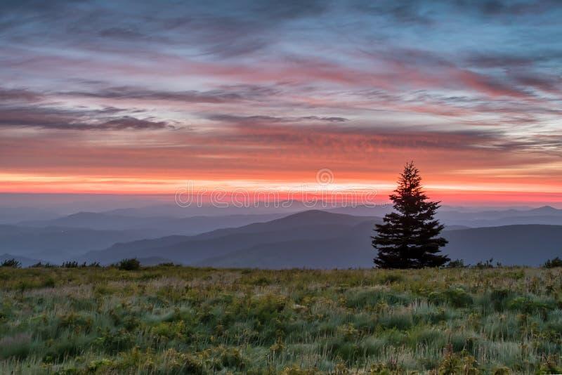 Pojedynczy sosna stojaki Nad góry przy słońce wzrostem zdjęcie stock