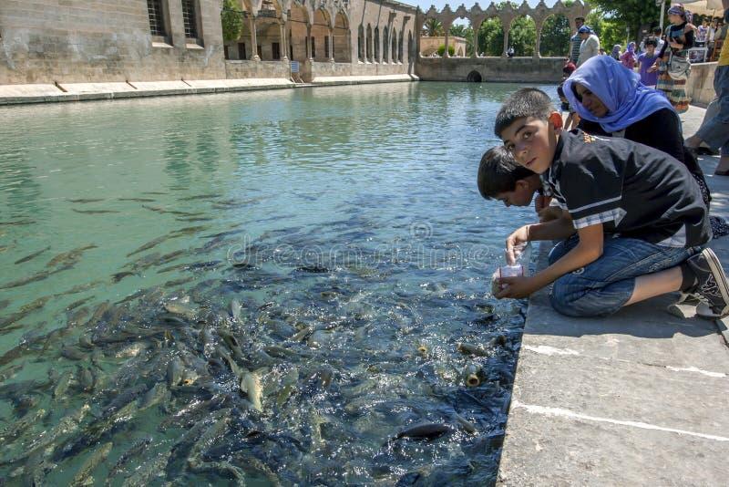 Pojkar matar den sakrala fisken på Balikli Gol royaltyfria foton