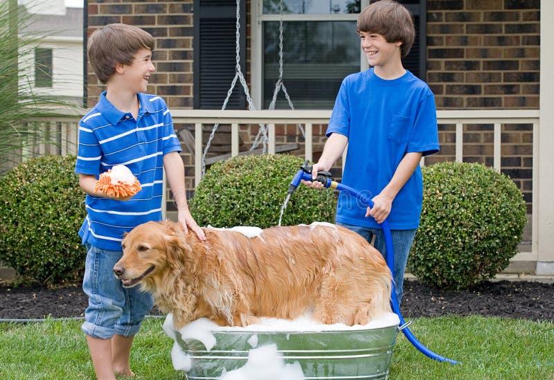 Pojkar som ger hund ett bad arkivbild