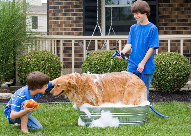 Pojkar som ger hund ett bad royaltyfri fotografi