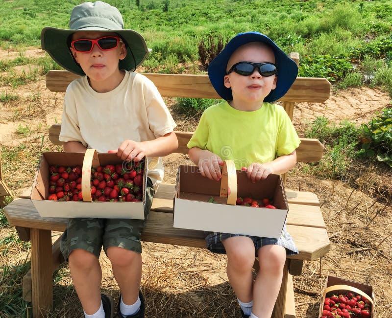 Pojkar som sitter med korgar av jordgubbar royaltyfri bild