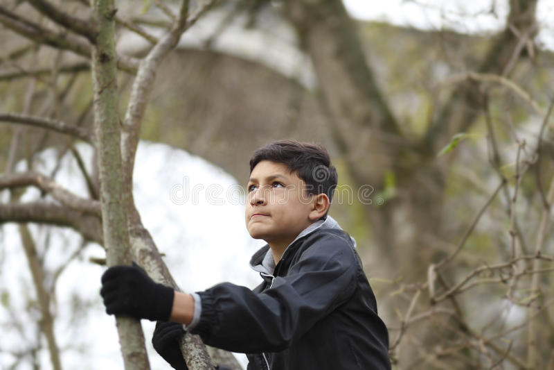 Pojke bland träden royaltyfri fotografi