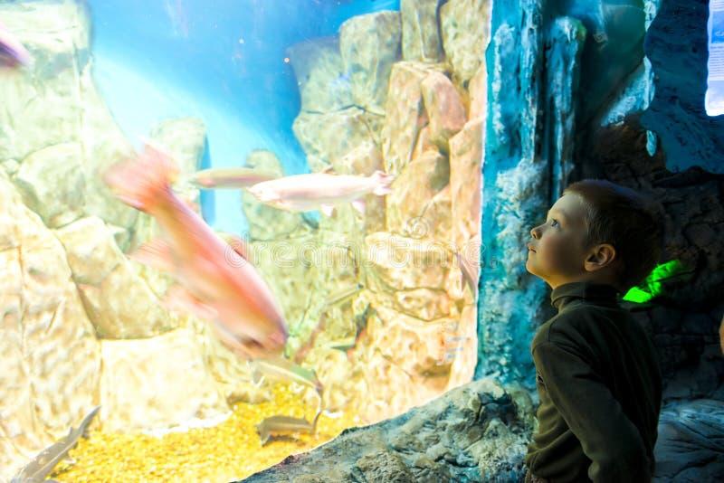 Pojke framme av ett enormt akvarium fotografering för bildbyråer