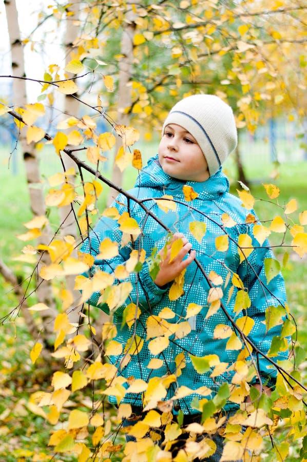 Download Pojke I En Björkskog I Höst Fotografering för Bildbyråer - Bild av caucasian, unge: 27281039