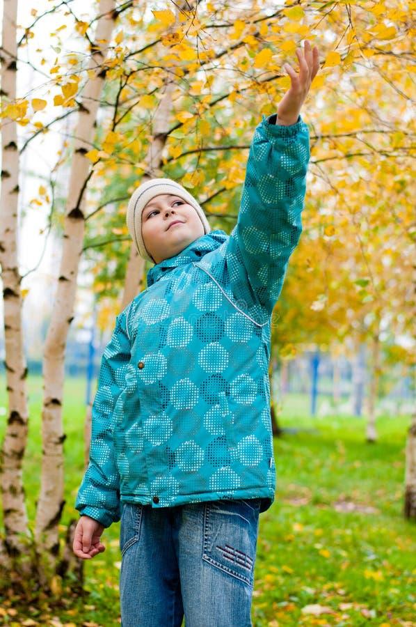 Download Pojke I En Björkskog I Höst Arkivfoto - Bild av utomhus, trees: 27281126