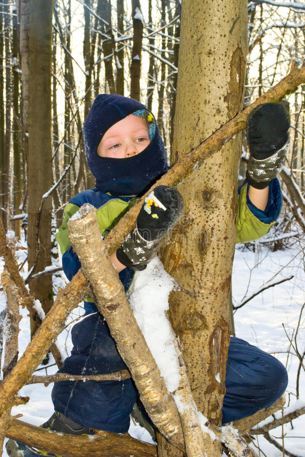 Pojke i ett träd royaltyfria foton