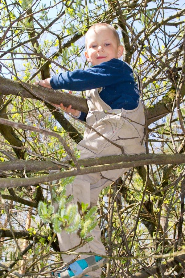 Pojke i ett träd royaltyfri fotografi