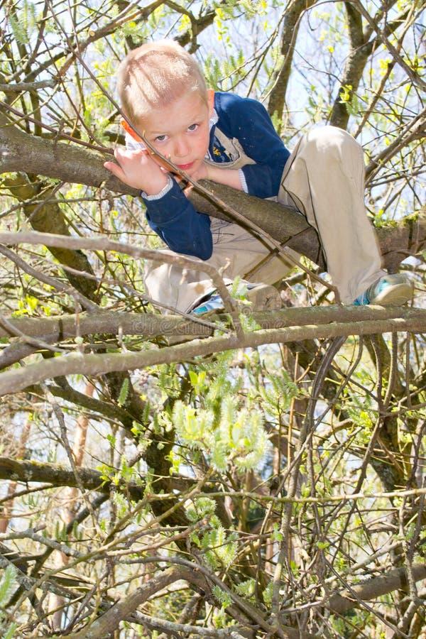 Pojke i ett träd royaltyfria bilder
