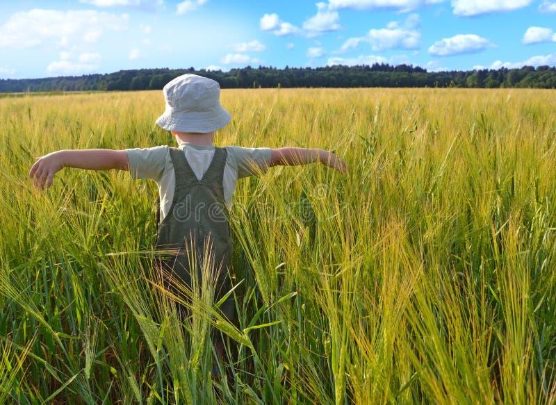 Pojke i ett vetefält royaltyfria foton