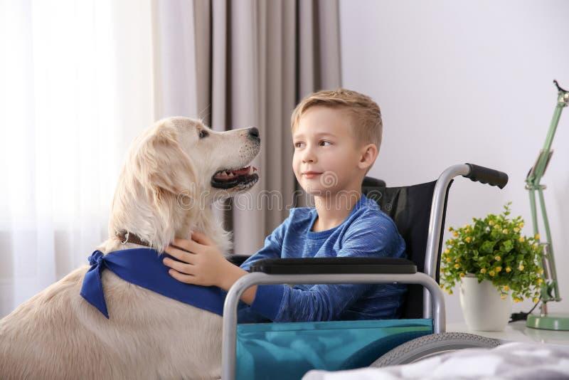 Pojke i rullstol med den tjänste- hunden arkivbilder