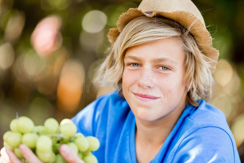 Pojke i vingård royaltyfria bilder