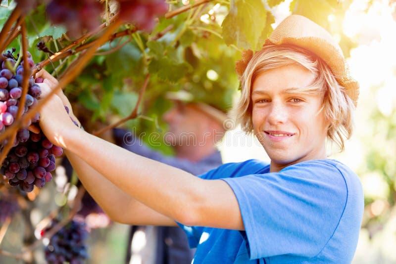 Pojke i vingård arkivbilder