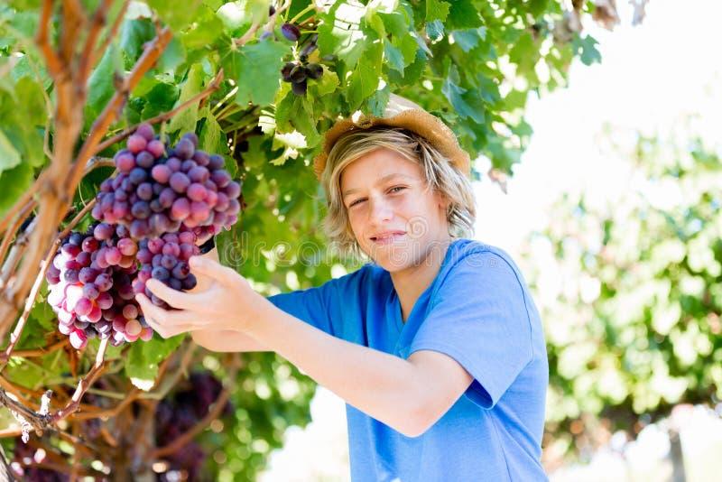 Pojke i vingård fotografering för bildbyråer
