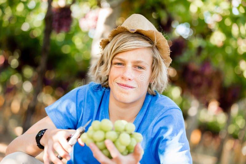Pojke i vingård arkivfoton
