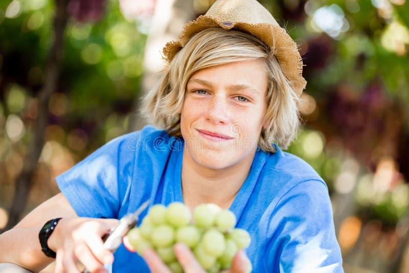 Pojke i vingård royaltyfri fotografi