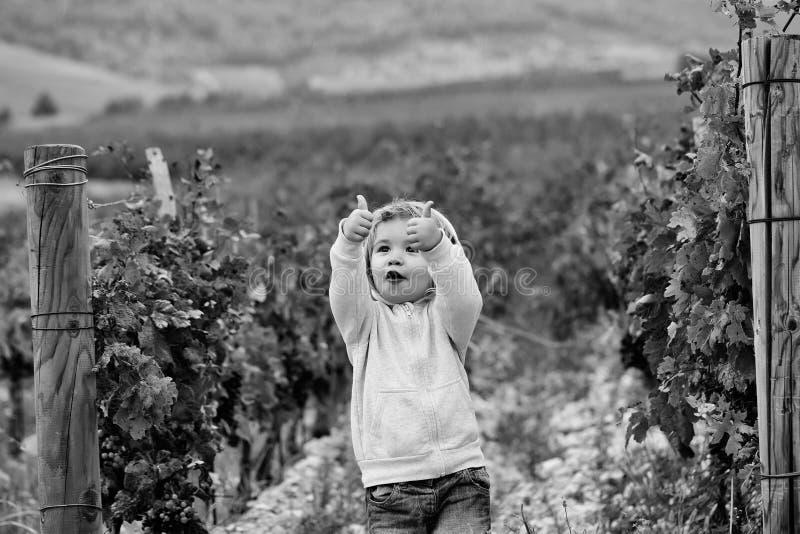 Pojke i vingården Gulligt behandla som ett barn pojkebarnet royaltyfria bilder