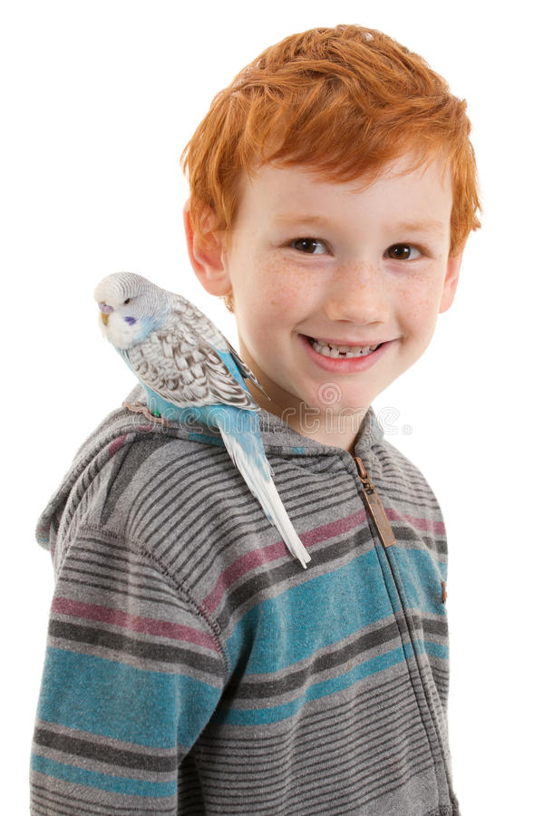 Pojke med älsklings- fågelundulat på skuldra arkivbilder