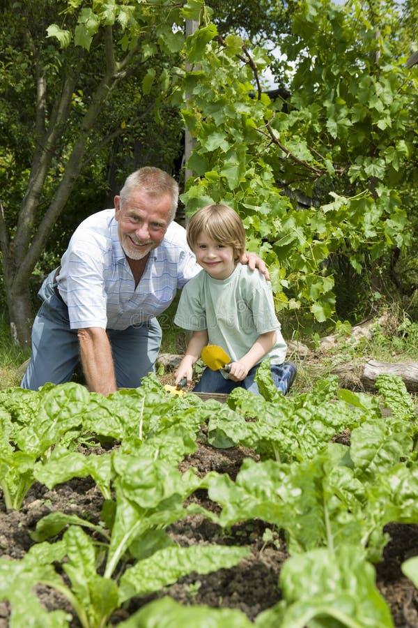 Pojke med att arbeta i trädgården för farfar arkivbild
