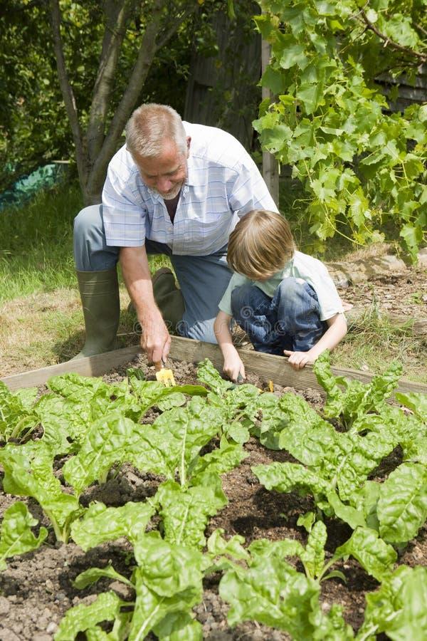Pojke med att arbeta i trädgården för farfar royaltyfri foto