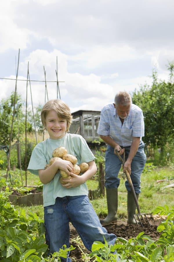 Pojke med farfadern som arbeta i trädgården i odlingslott fotografering för bildbyråer