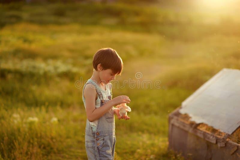 Pojke med höna royaltyfria foton