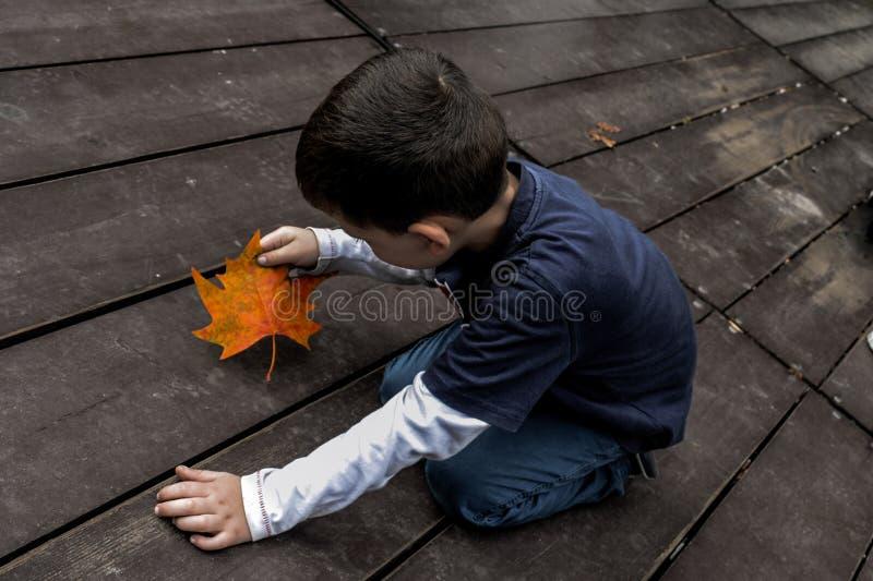 Pojke och en lönnlöv arkivfoton