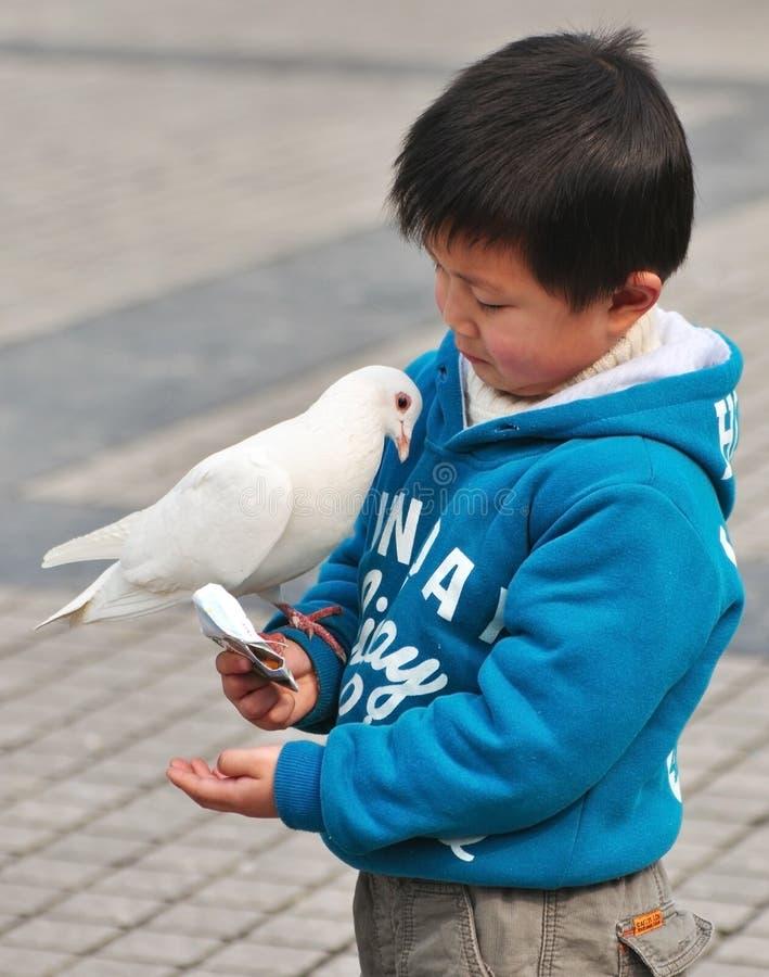 Pojke och fågel royaltyfri bild