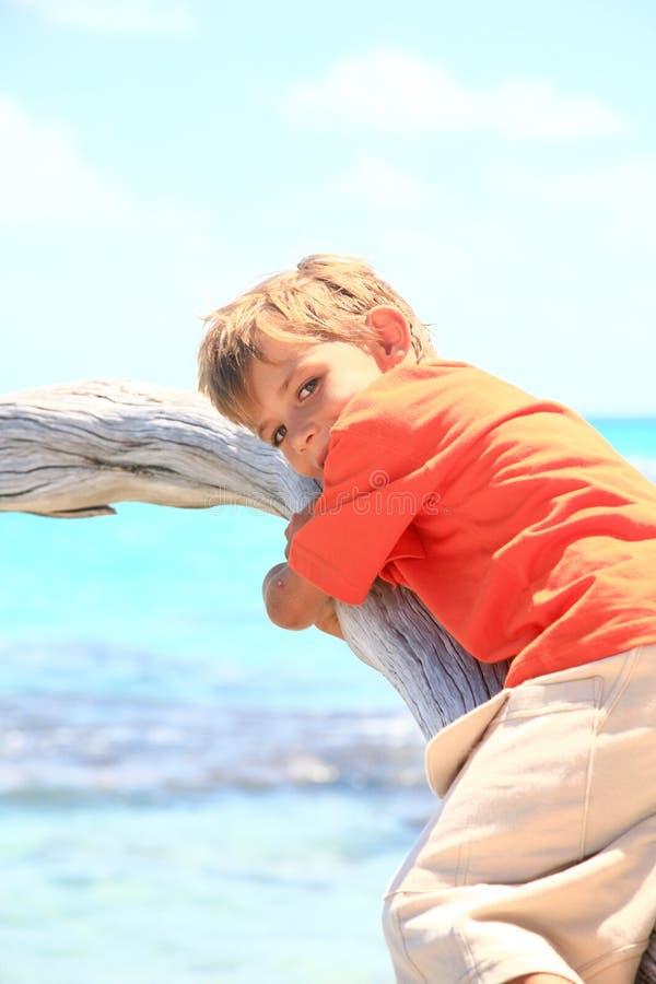 Pojke på en tree arkivfoton