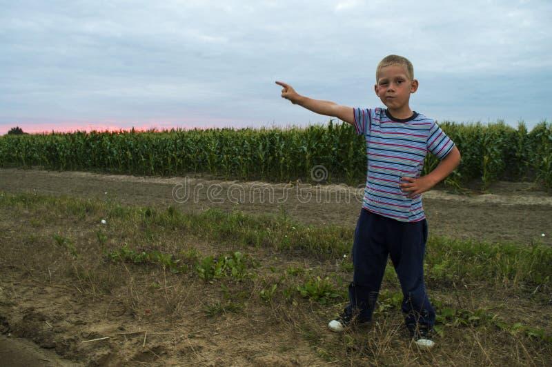 Pojke på fälthavre i aftonen fotografering för bildbyråer