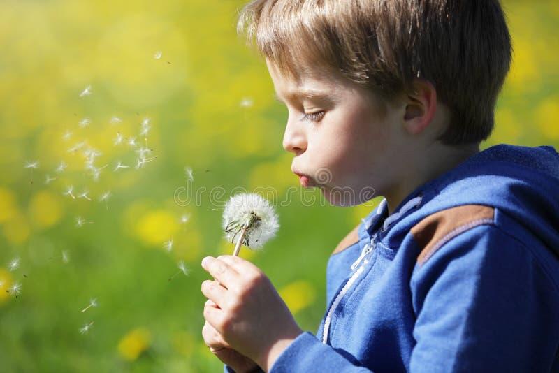 Pojke som blåser maskrosfrö i ett fält arkivbild