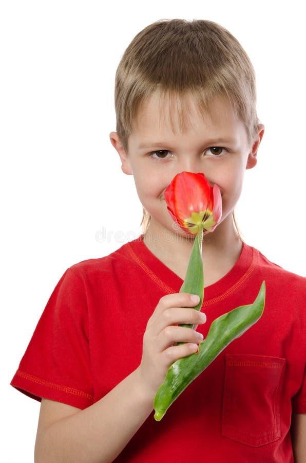 Pojke som rymmer den röda tulpan fotografering för bildbyråer