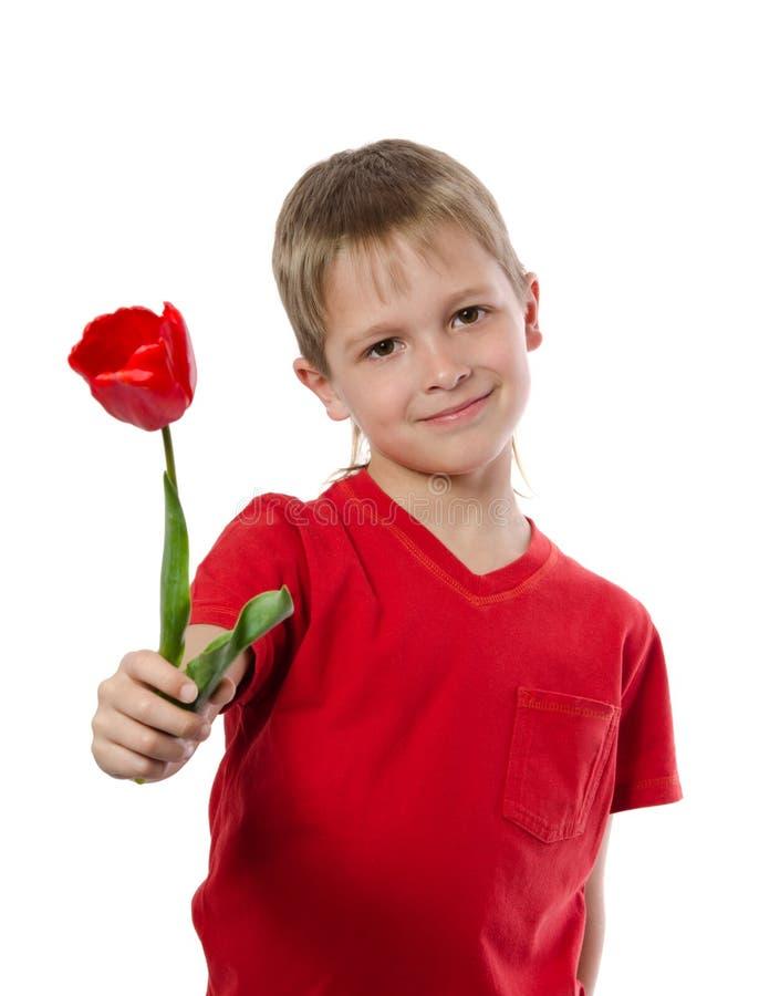 Pojke som rymmer den röda tulpan royaltyfri foto