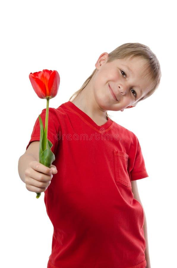 Pojke som rymmer den röda tulpan royaltyfri bild