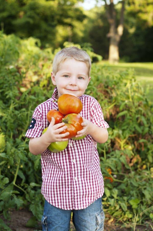 Pojke som rymmer självodlade tomater arkivfoton