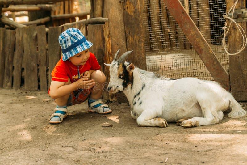 Pojke som sitter nära en vit get, kamratskap mellan ett barn och ett djur i zoo trycka på zoo Djur terapi royaltyfria bilder
