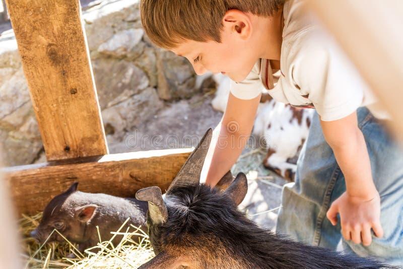 Pojke som tar omsorg av tamdjur på en lantgård royaltyfria bilder