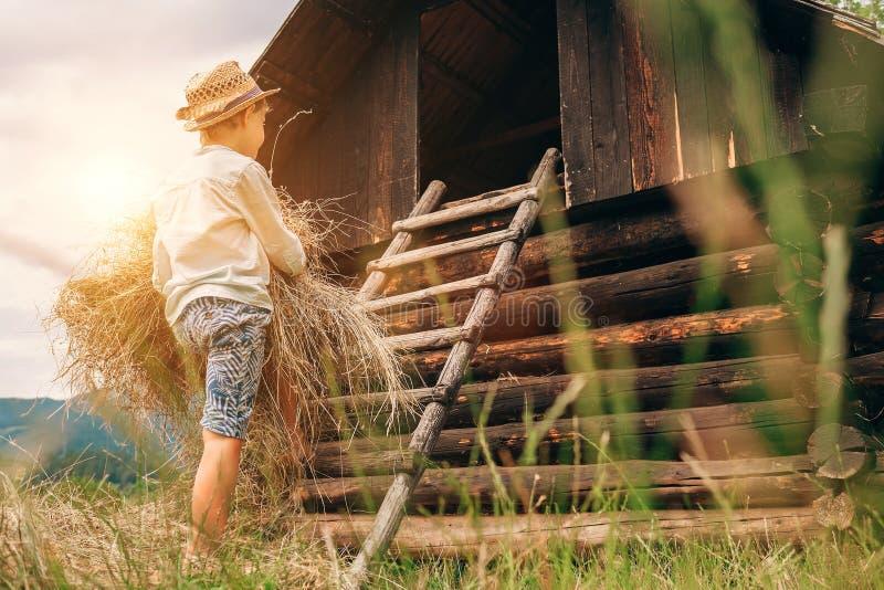 Pojkehjälp satte hö i hayloften royaltyfri foto