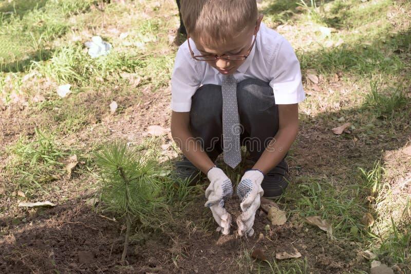 Pojken är första växter för en väghyvel per cederträträd nära skolan i parkera arkivbilder