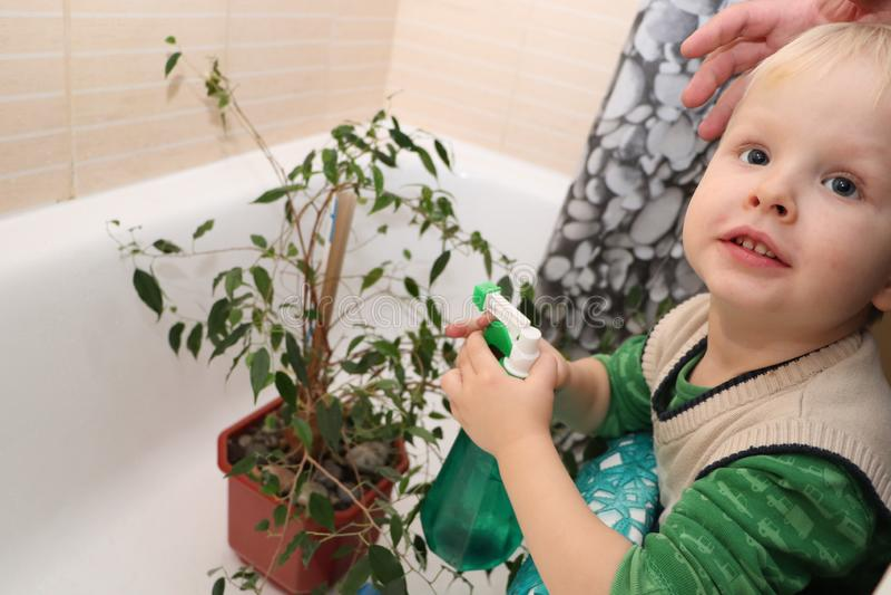 Pojken att bry sig för en hem- växt i badrummet Fikus Benjamina arkivfoto