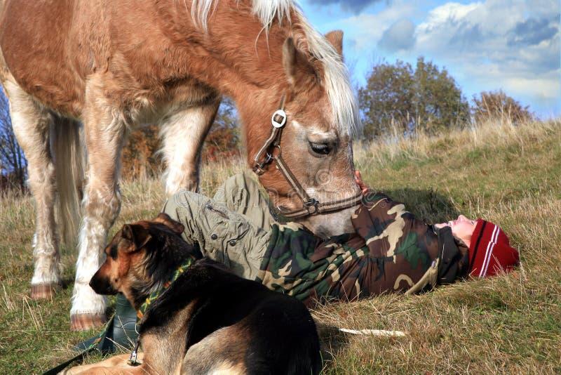 pojken dogs hästen royaltyfria foton