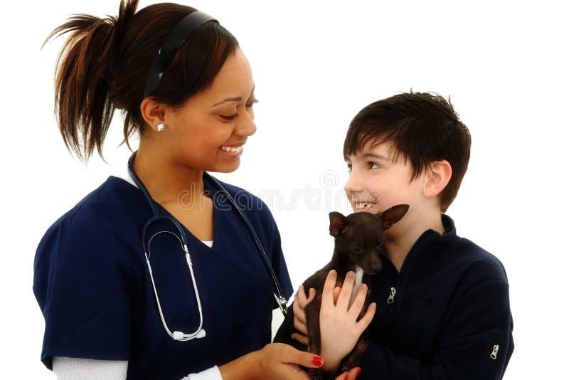 Pojken får den älsklings- chihuahuaen baksidt från veterinär royaltyfria bilder