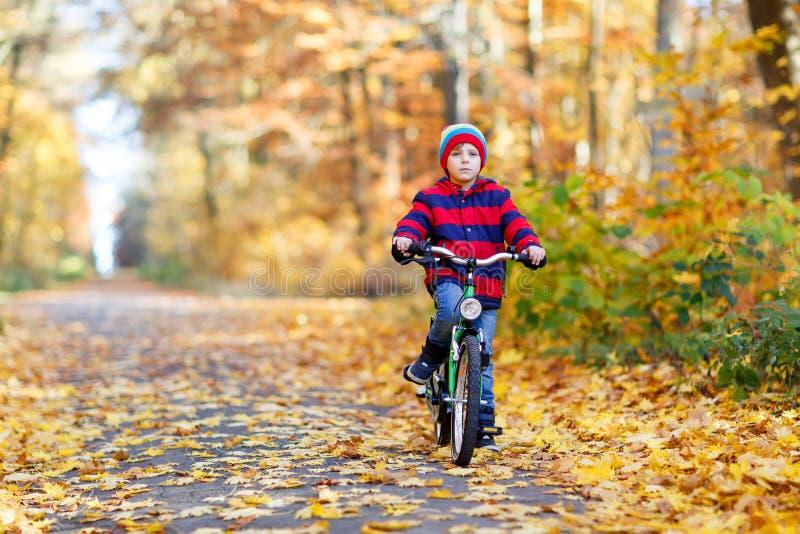 Pojken för den lilla ungen i färgrikt värme kläder i hösten Forest Park som kör en cykel Aktivt barn som cyklar på solig nedgångd royaltyfri foto
