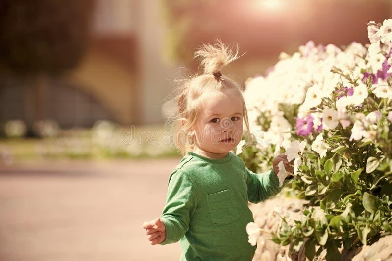 Pojken för den lilla ungen som står den near blomsterrabatten med att blomstra petunian, blommar royaltyfri fotografi