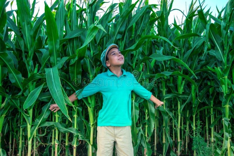 Pojken går över fältet med havre royaltyfri fotografi