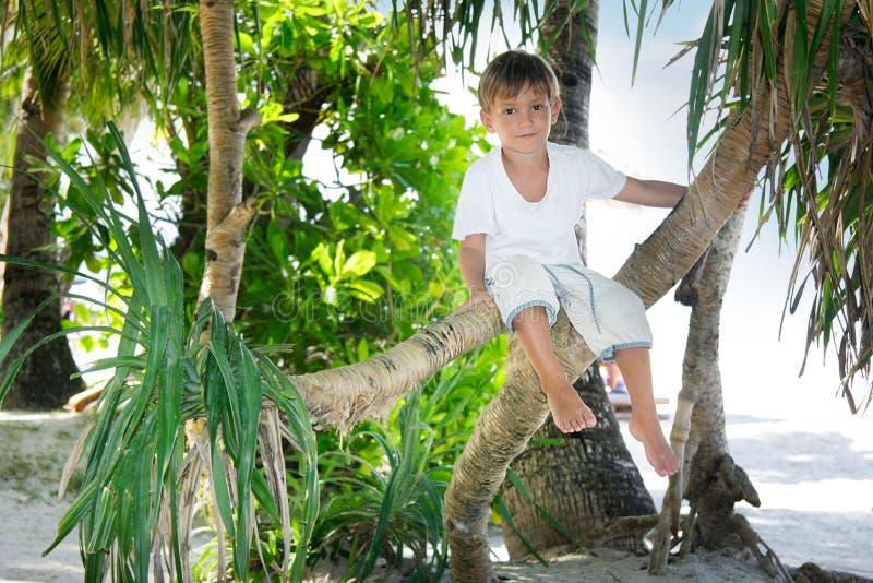 pojken gömma i handflatan den sittande treen royaltyfri bild