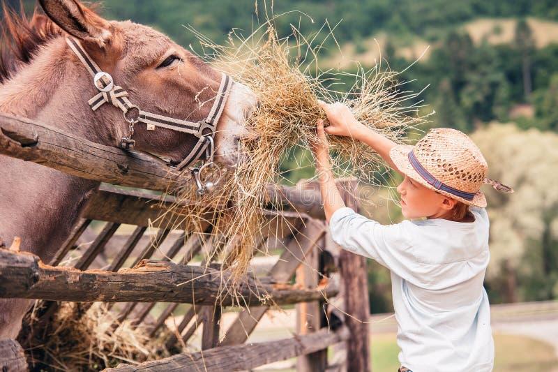 Pojken hjälper att mata en åsna på lantgården royaltyfria bilder